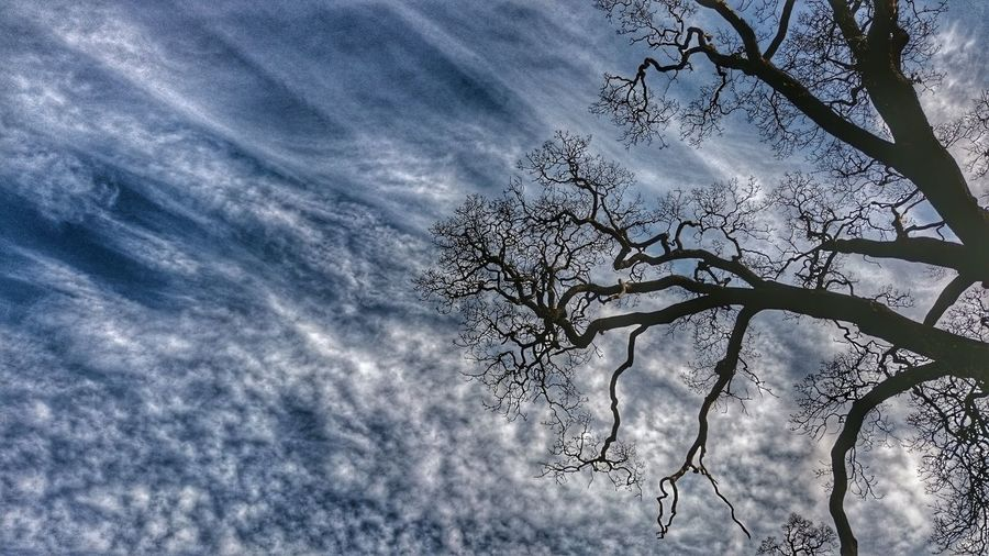 Skyporn Sky And Clouds Tree_collection  Branches And Sky Hrd_collection Fine Line Cloud_collection  Sony Xperia Z3 Natural Beauty Plain & Simple