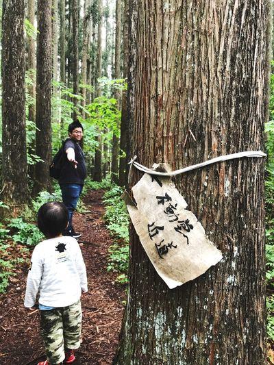 杉並木 Tree Nature Outdoors Boys Forest