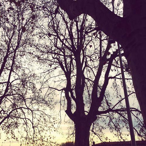 JaimePrendreDesPhotosCommeÇa J'aimeLaNature