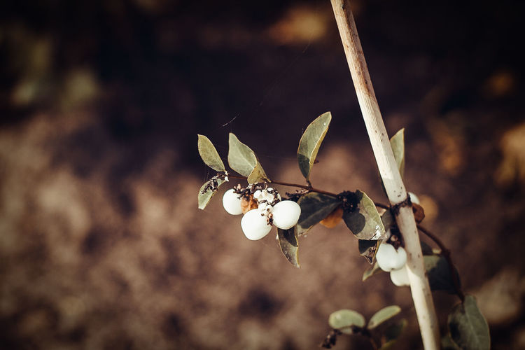 Ripe berries in autumn on a dark background