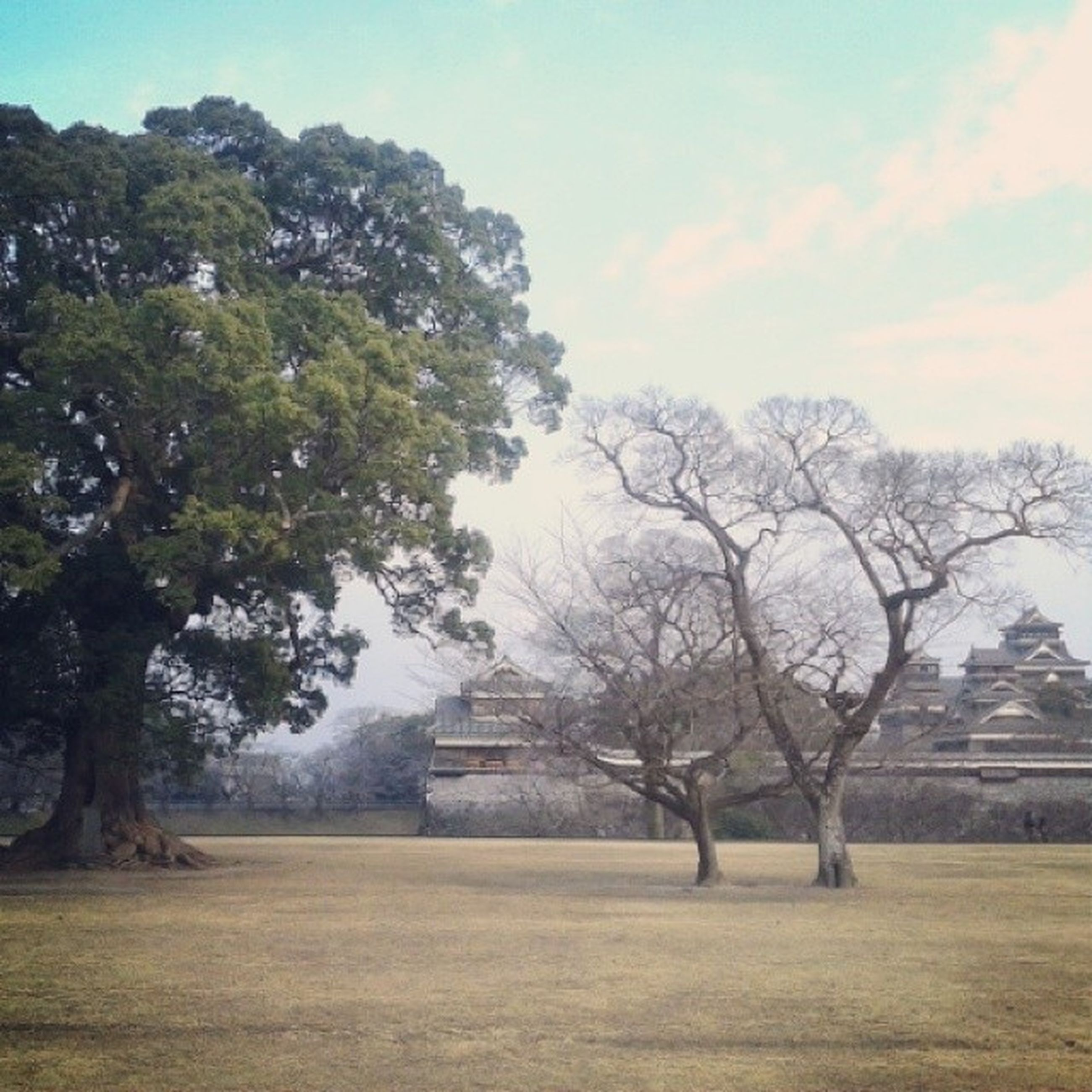 tree, architecture, built structure, sky, building exterior, history, bare tree, grass, tranquility, travel destinations, nature, the past, branch, day, landscape, field, tranquil scene, cloud - sky, no people, old