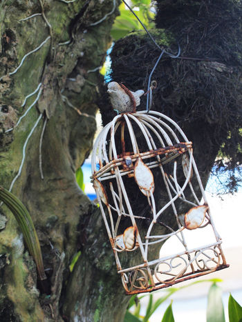 Rustic Animal Themes Bird Bird Cage Bird Cages Branch Cage Caged Close-up Day Decoration Garden Hanging Nature No People Old Outdoors Steel Cage Tree Tree Trunk