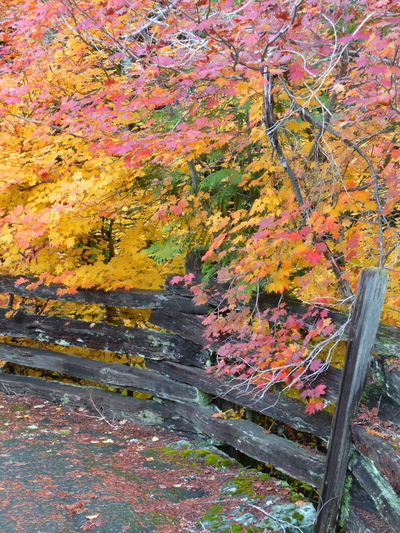 Fall Colors October Rainier National Park Autumn Beauty In Nature Leaf Nature No People Outdoors Split Rail Fence Tranquility Tree