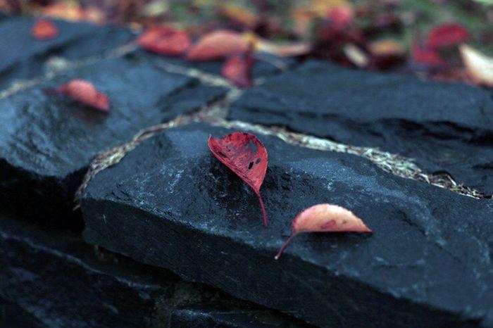 Canon Eos6d 50mm Leaf Leafs Leaf 🍂 Fall 대전 Daejeon 낙엽 단풍