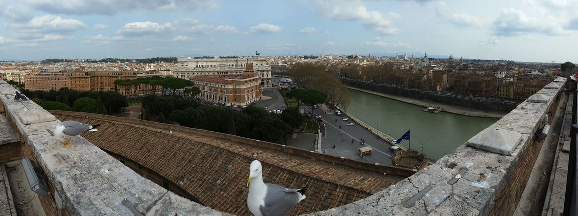 High Angle View Day Cloud - Sky Built Structure Outdoors Architecture Sky Building Exterior Animal Themes Cityscape Bird City No People Castel San't Angelo Roma The Tiber Gull Gulls Panorama Tourism Destination Tourism