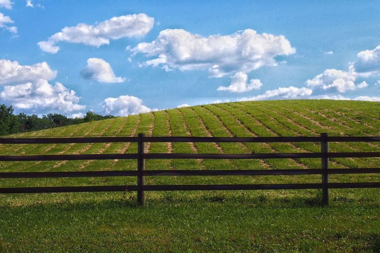 Fence on grassy field against sky