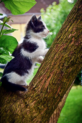 Photography Photooftheday Art EyeEm Nature Photography Naturelovers Cat Cats Of EyeEm Tree Trunk Tree One Animal Animal Wildlife Day No People Nature Climbing Close-up Animals In The Wild Outdoors Perching