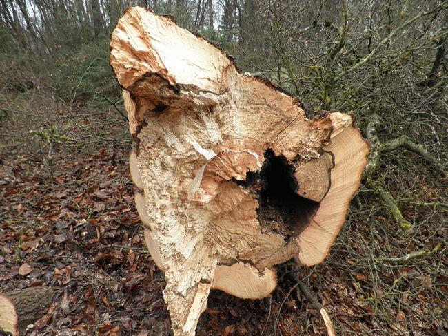 Tree Baumstamm Krustenbrandpilz Pilzbefall Abgestorbene Bäume Totholz Abgestorben