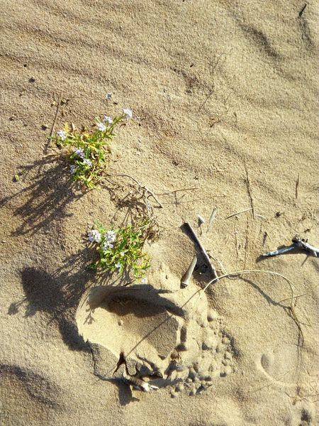 Sand Sunlight Flowers Scenics Tranquil Scene Apocalipsis Dry Land Landscape Beach Nature Flores Seco Dry Flower  Dunas Deserts Around The World Desierto