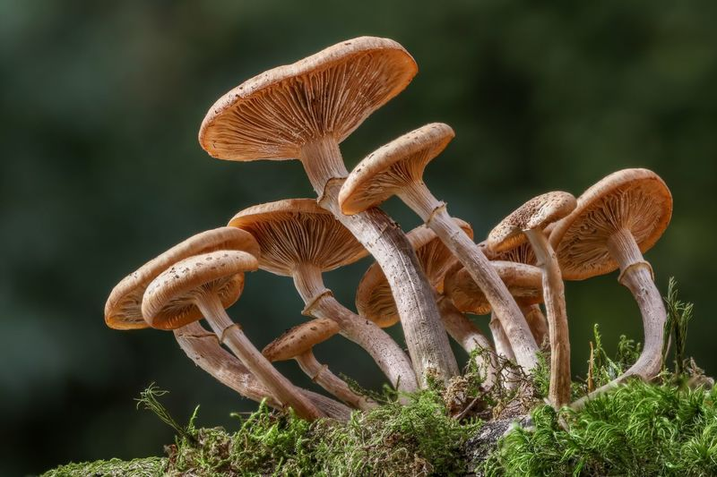 mushrooms Forest Autumn Mushrooms Mushroom Plant Growth Nature Close-up No People Focus On Foreground Beauty In Nature Flowering Plant