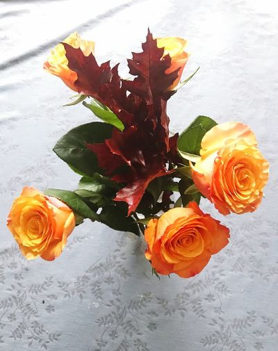 Halloweencolors Plant Beauty In Nature Flower Flowering Plant No People High Angle View Nature Rosé Rose - Flower Table Orange Color Flower Head Petal