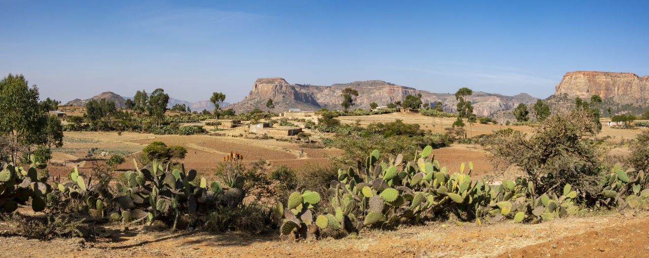 Environment Landscape Scenics - Nature Tranquil Scene Clear Sky Blue Non-urban Scene Tranquility No People Mountain Growth Field Plant Ethiopia Panorama