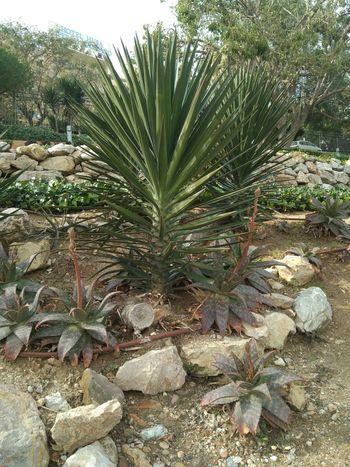 Garden Palm Leaf Close-up Plant Botanical Park