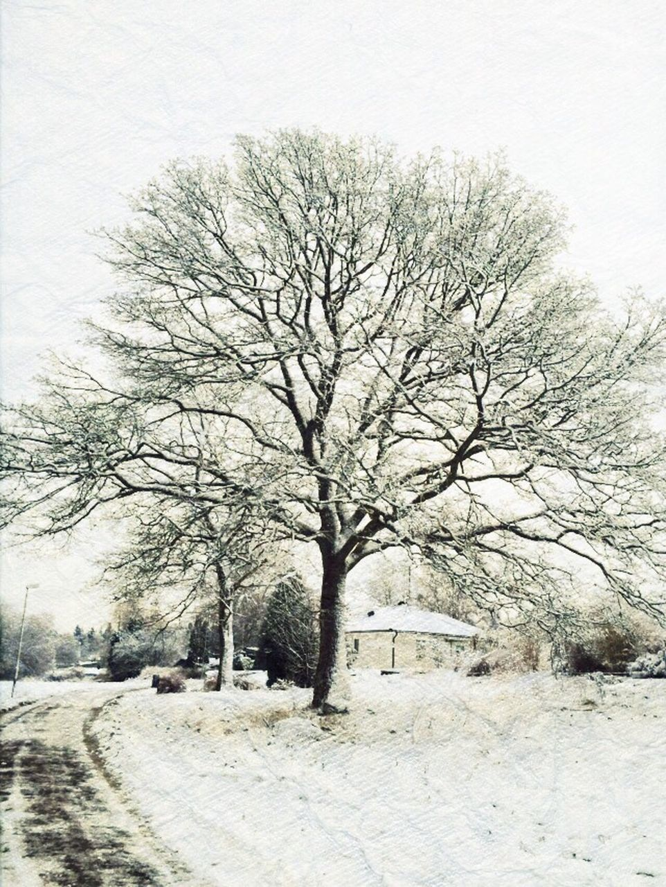 Trees In Snow Covered Park