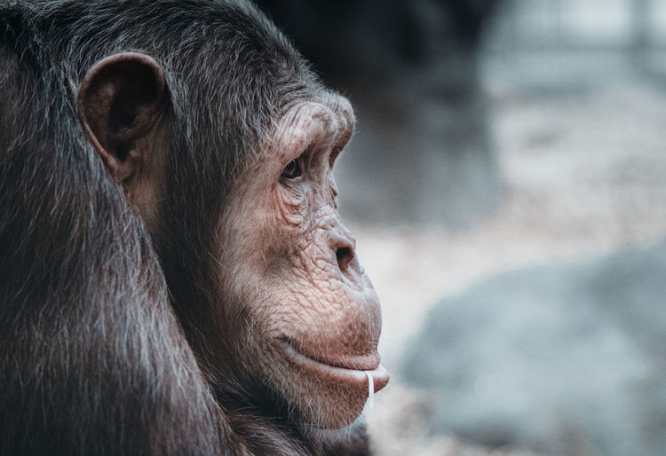 Close-up of monkey in zoo