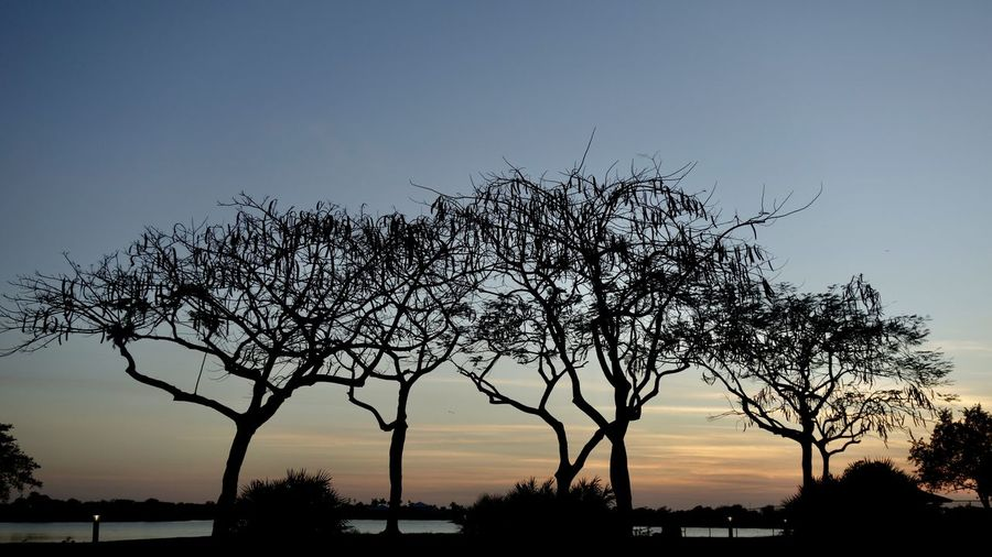 Silhouette bare tree against clear sky during sunset