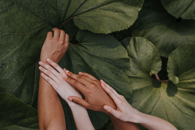 Close-up of hands over plants
