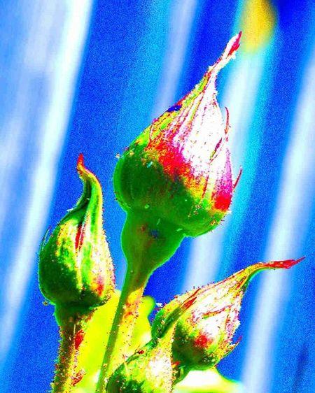 Small rose buds 1) Myworld_in_blue 2) Ig_affair_weekly 3) Vms_macro 4) Small_world_upclose 5) 5star_images 6) Macro_vision 7) Sn_apr1 8) Mta_macro 9) Pic_groups 0) Macroclique 1) Tgif_nature 2) Pocket_family 3) Igglobalclubmacro 4) Macro_captures 5) Fotofanatics_macro_ 6) Ponyfony_flowers 7) Macroworld_tr 8) 9vaga_flowerscolor9 9) Flair_macro 0) Quintaflower 1) Ptk_macro 2) Naturehippys 3) Macro_secrets 4) Tv_colors 5) Macro_holic 6) ig_azhubs 7) macro_brilliance 8) 9vaga_macro9 9) show_us_macro 0) global_nature_macro