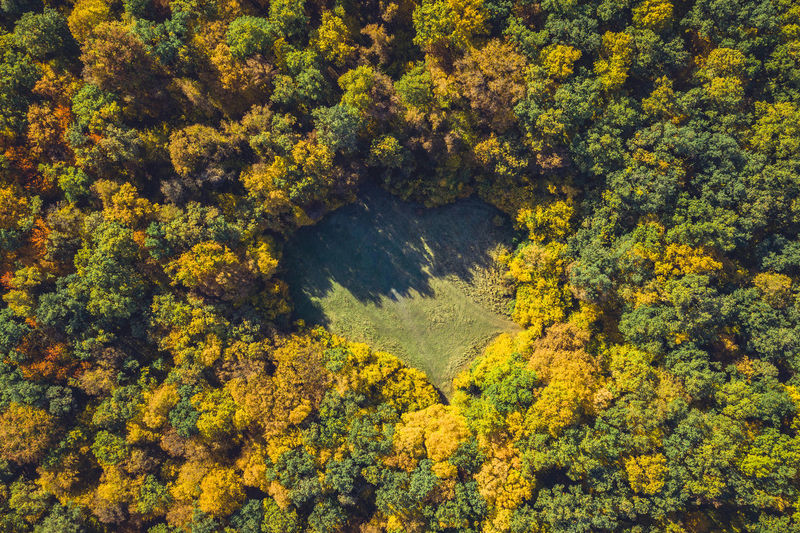 Aerial View Of Trees In Forest During Autumn