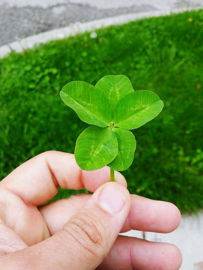 Cropped hand of person holding five leaf clover against field