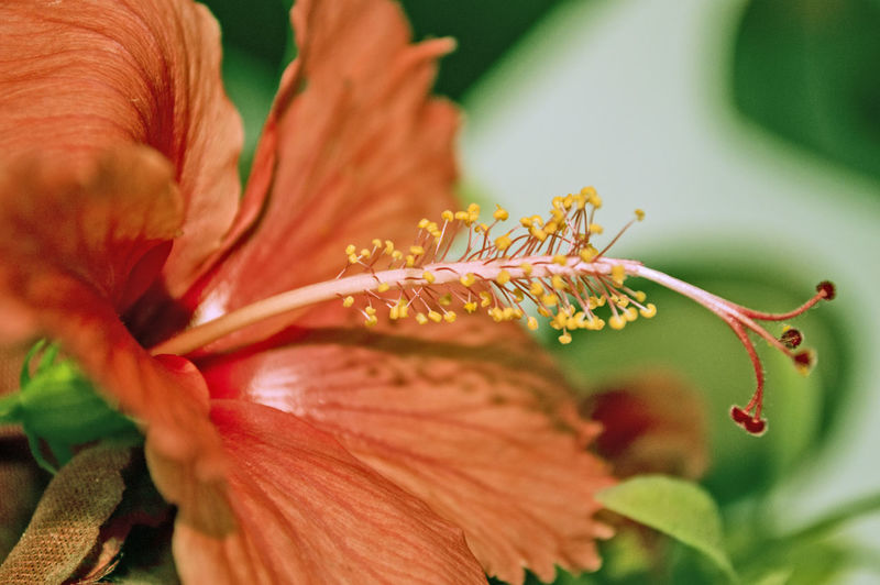The simplicity of art Beauty In Nature Close-up Day Day Lily Flower Flower Head Fragility Freshness Growth Leaf Nature No People Outdoors Petal Plant Paint The Town Yellow