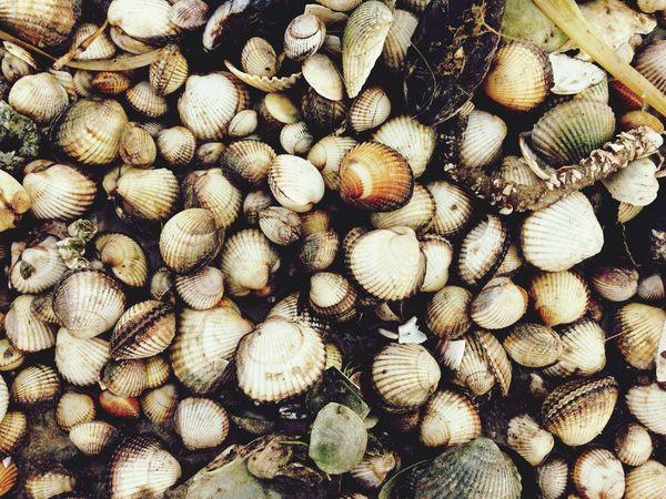 Showcase: January Shell Shells