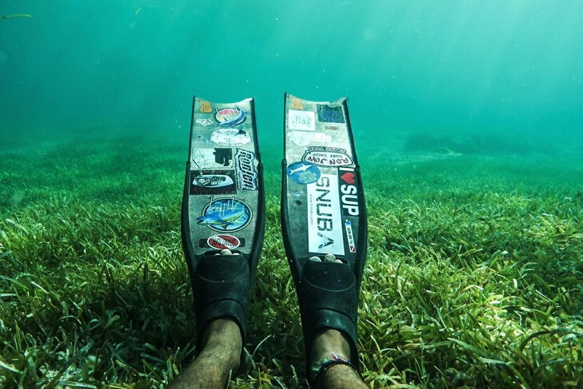 🌿Resting in the seagrass🌿~ Water Grass Outdoors Nature Turksandcaicos Adventure Paradise Grandturk Beauty In Nature Snorkeling Nature Coral Sea Life Summer Swimming Sony