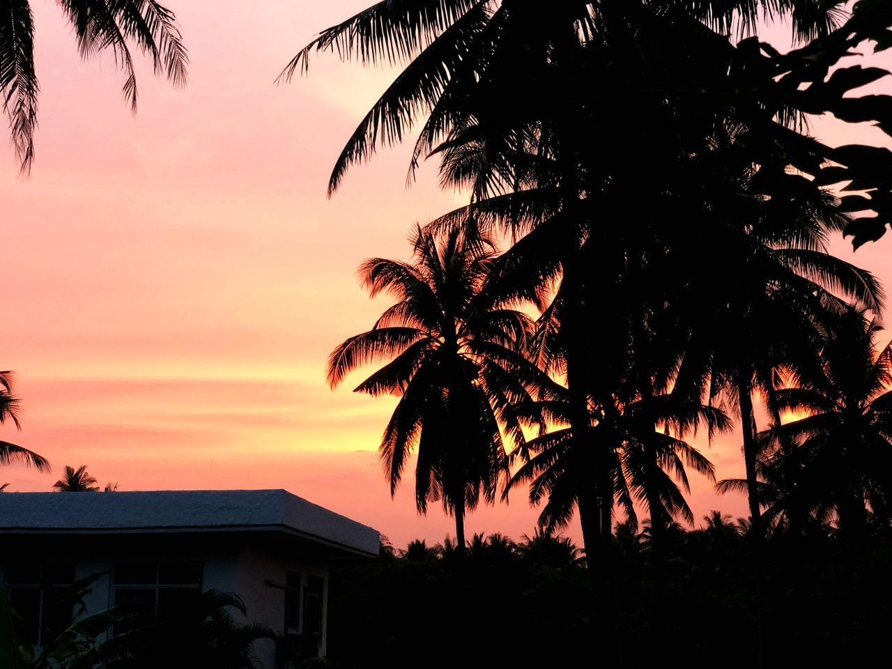 SILHOUETTE OF PALM TREES AGAINST SKY DURING SUNSET
