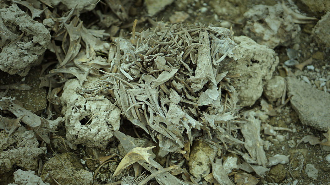 FISH BONES Fossil Close-up Day Dry Fish Fish Bones Focus On Foreground Land Outdoors