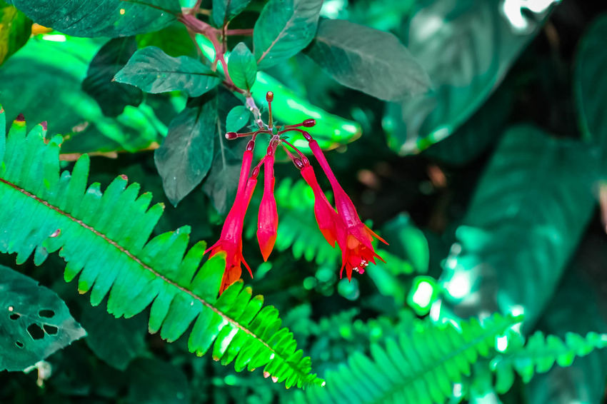 Beauty In Nature Green Color Leaf Leaves Nature Plant Plant Part Red