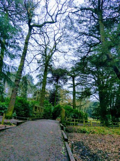 Tree Nature Outdoors Sky Tranquility Bridge