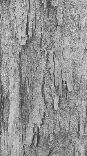 Bark Texture Greyscale 43GoldenMoments