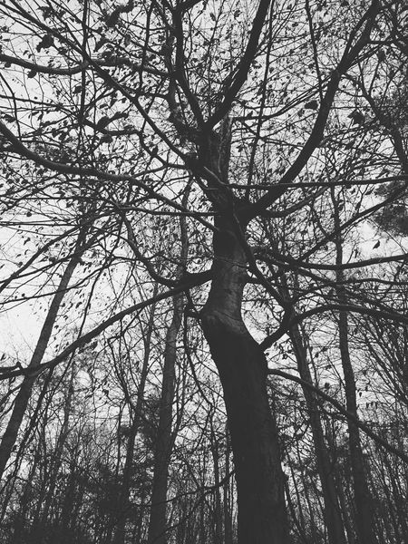 Our beautiful forest Sonian Forest Brussels Trees Winter Blackandwhite Shapes In Nature  Branches Tree Nature Forest Wintertime In The Forest It's Cold Outside VSCO Vscocam Mobilephotography Mobile Photography Smartphonephotography XPERIA Black And White Nature Photography Here Belongs To Me