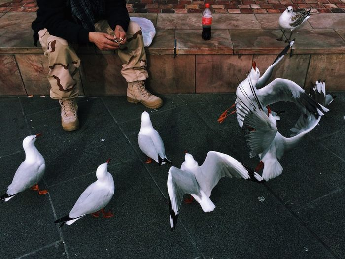 Feeding time AMPt - Street Streetphotography Mobilephotography Vscocam The Moment - 2015 EyeEm Awards