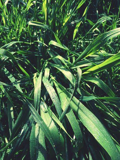 Nature Green First Eyeem Photo
