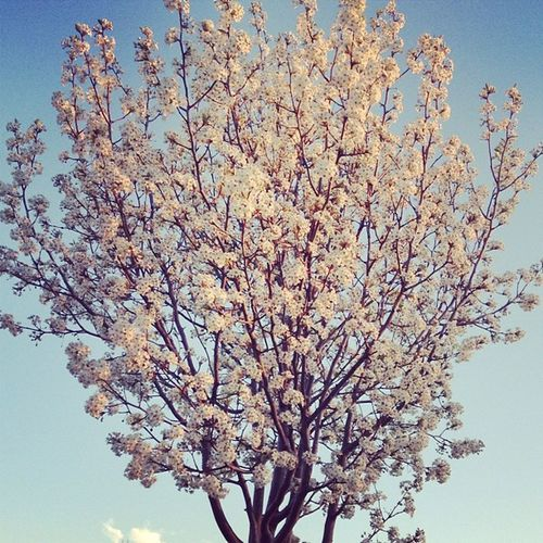 Spring is truly here :-)