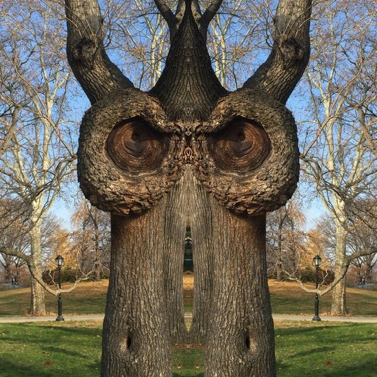 Central Park Central Park Tree Owl Eyes Owl In The Tree Freaky Eyes Freaky Tree Mirror Image