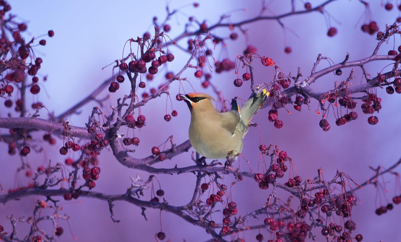 Sue.B Nature photographie 🦋