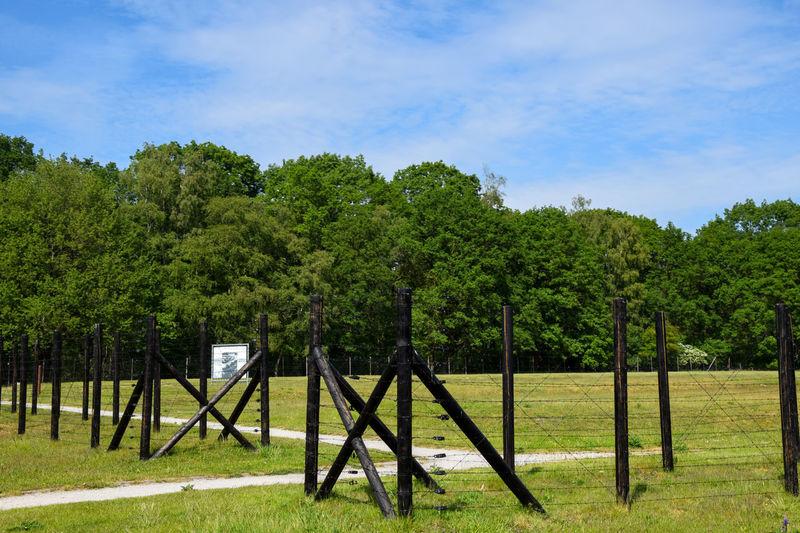 Trees growing on field against sky