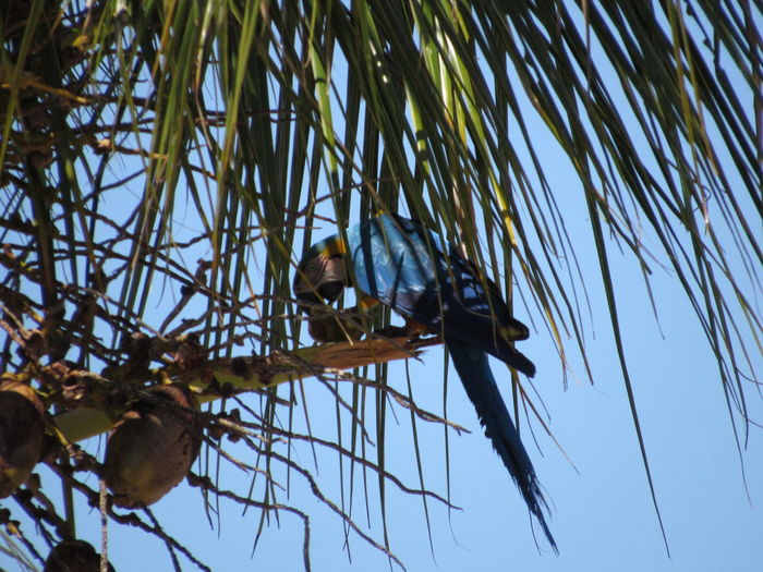 Beauty In Nature Bird Blue Blue Arara Day Low Angle View Nature Plants Wildlife