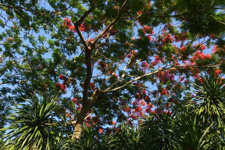 Flower Tree Trunk Blooming