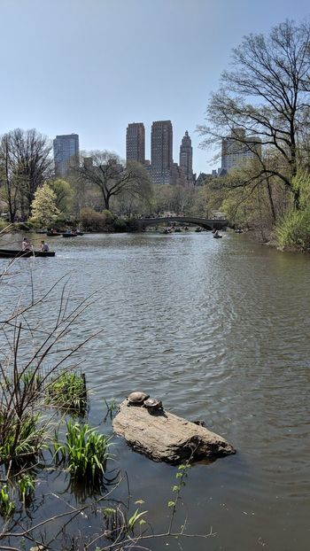 Fairy Tail Pond in Central Park NY Turtle Fairy Tail Pond Central Park New York City New York Travel Travel Photography Nature Wildlife Good Times Followme Pixelxl2 City Cityscape Urban Skyline Water Modern Skyscraper Sky Architecture Calm