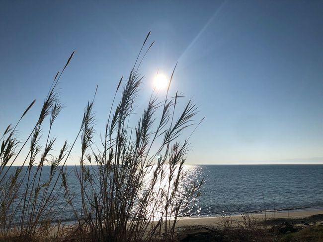 Jonio, Sole. Sea Nature Horizon Over Water Beauty In Nature Sun Water Tranquil Scene Sunlight Beach Tranquility Scenics No People Outdoors Plant Clear Sky Sky Marram Grass Day