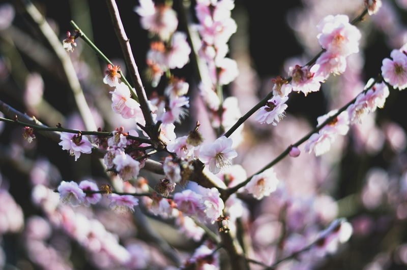 Flower Nature Tree Pink Color Growth Blossom Beauty In Nature Branch Springtime Close-up Freshness No People Day Plant Outdoors Almond Tree Flower Head Fragility Portrait GetbetterwithAlex Macro Flowers Full Length Human Eye Brandon Woelfel Nature EyeEmNewHere
