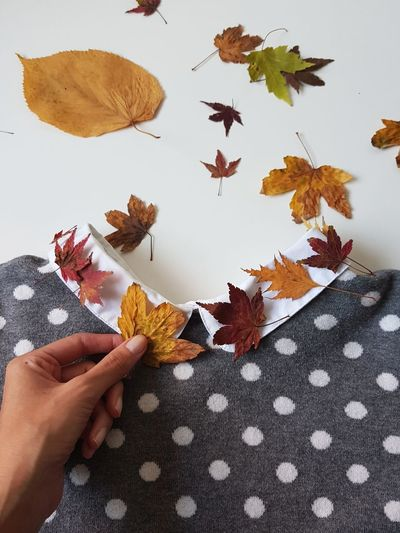 Cropped Hand Of Woman Arranging Autumn Leaves On Dress Over White Background