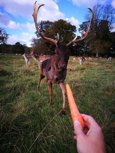 Outdoors Animal Themes Mammal Tree Antler Nature Ireland🍀 First Eyeem Photo Eye4photography  43GoldenMoments Beauty In Nature EyeEm Nature Lover Nature Deer Moments Deerpark Deer Sighting Deer ♥♥ Phoenix Park Dublin Dublin, Ireland DublinToday