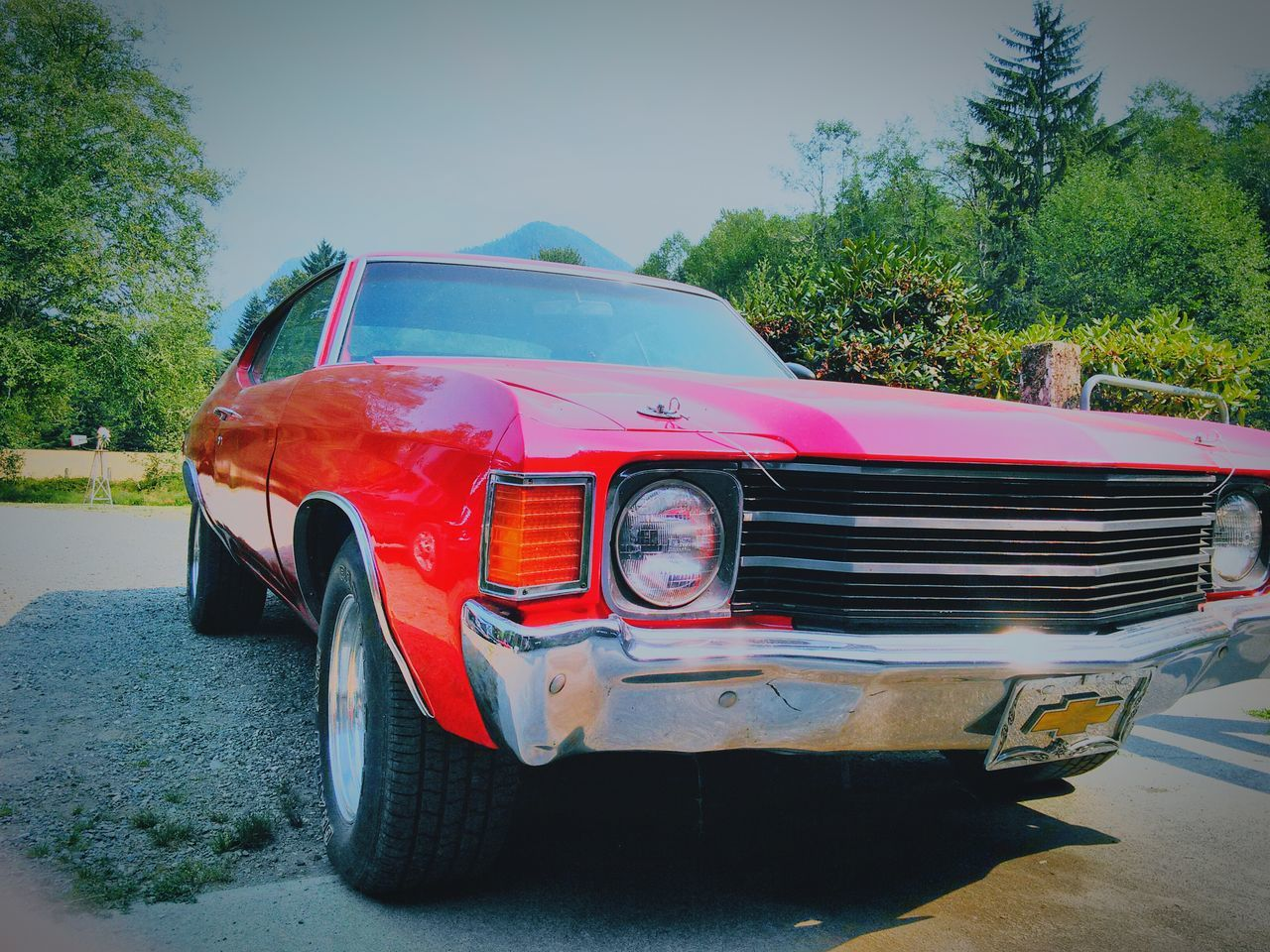 transportation, mode of transport, car, land vehicle, stationary, day, old-fashioned, red, tree, outdoors, no people, sky