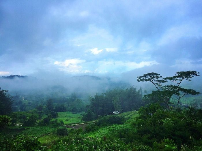 Tree Nature Fog Landscape Beauty In Nature Scenics Mountain Sky Day Cloud - Sky Outdoors Green Color Blue Sky Adventure Tourism Travel Destinations Scenery Mountain Range Tropical Climate Cebu City, Philippines Osmeña Peak