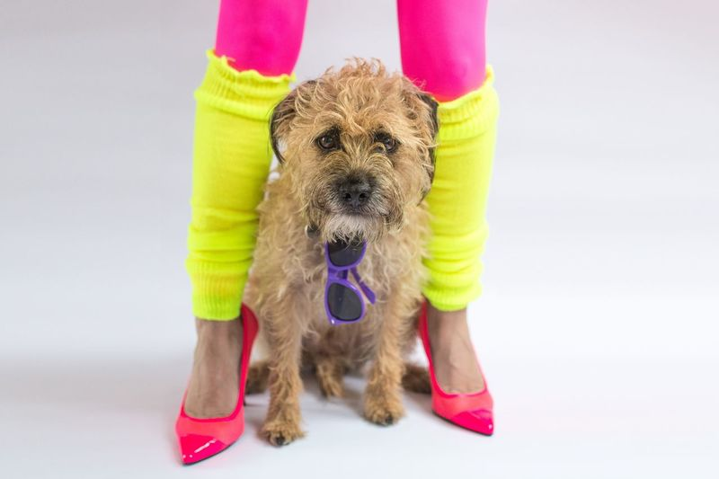 80s Dog Looking