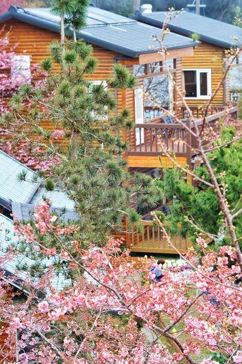 臺灣 恩愛農場 Nature Sky Day Built Structure Building Exterior Architecture Flower Growth No People Outdoors Nature Tree Beauty In Nature